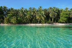 Vreedzaam Caraïbisch strand en duidelijk water in Panama stock afbeeldingen