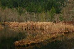 Vreedzaam Noordwesten bosmeer Stock Afbeeldingen