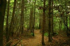 Vreedzaam Noordwesten Forest Trail stock afbeelding