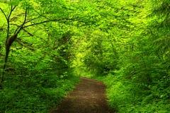 Vreedzaam Noordwesten Forest Trail Royalty-vrije Stock Afbeeldingen