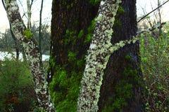 Vreedzaam Noordwestenbos in de lente Royalty-vrije Stock Foto's