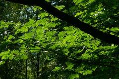 Vreedzaam Noordwestenbos in de lente Stock Afbeelding