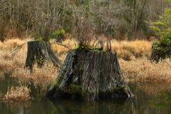 Vreedzaam Noordwestenbos en moerasland stock foto