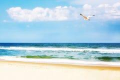 Vreedzaam Strand met Zeemeeuw het Stijgen Stock Afbeelding