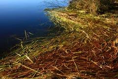 Vreedzaam van het Noordwestenbos en water riet stock afbeeldingen