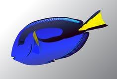 Vreedzame Blauwe vissen Royalty-vrije Stock Foto's