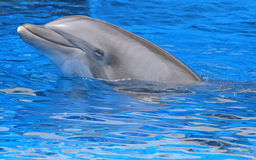 Vreedzame dolfijn Royalty-vrije Stock Fotografie