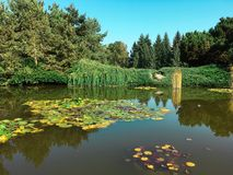 Vreedzame groene waterlily vijver Royalty-vrije Stock Afbeeldingen