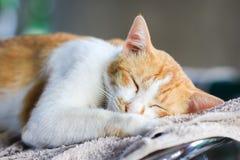 Vreedzame kattenslaap royalty-vrije stock foto