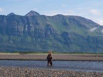 Vreedzame Kust Bruine grizzliy arctos van berenusus - - op KE stock afbeeldingen