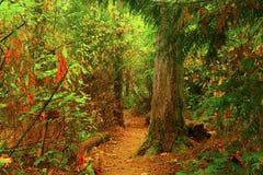 Vreedzame Noordwesten bos wandelingssleep Stock Foto