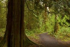 Vreedzame Noordwesten bos wandelingssleep stock afbeeldingen