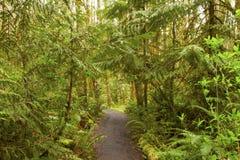 Vreedzame Noordwesten bos wandelingssleep Royalty-vrije Stock Foto's