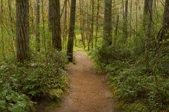 Vreedzame Noordwesten bos wandelingssleep Royalty-vrije Stock Afbeeldingen
