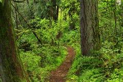 Vreedzame Noordwesten bos wandelingssleep Stock Foto's