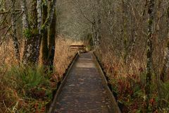 Vreedzame Noordwesten bos wandelingssleep Royalty-vrije Stock Afbeelding