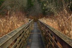 Vreedzame Noordwesten bos wandelingssleep Royalty-vrije Stock Fotografie