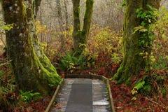 Vreedzame Noordwesten bos wandelingssleep Stock Afbeelding
