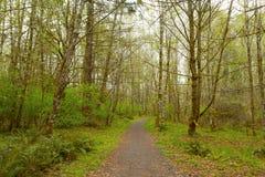 Vreedzame Noordwesten bos wandelingssleep in de lente Stock Afbeelding