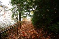 Vreedzame Noordwesten bos wandelingssleep in de winter Royalty-vrije Stock Afbeelding