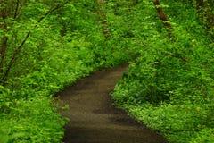 Vreedzame Noordwesten bos wandelingssleep in de zomer Royalty-vrije Stock Fotografie