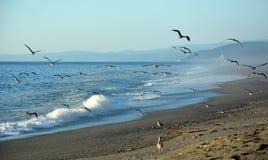 Vreedzame overzeese kust Stock Afbeelding