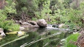 Vreedzame stroom/kreek met waterval in de lente stock videobeelden