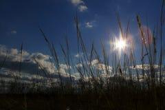 Vreedzame zonneschijn in het voorgrondgras. royalty-vrije stock fotografie