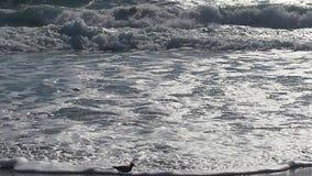 Vreedzame zoute golven Royalty-vrije Stock Foto's