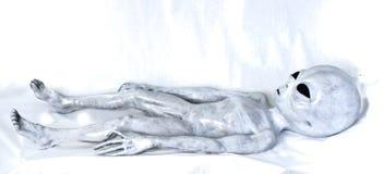 Vreemd Grijs die op bed leggen Royalty-vrije Stock Afbeelding