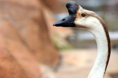 Vreemd uitziende vogel Royalty-vrije Stock Foto's