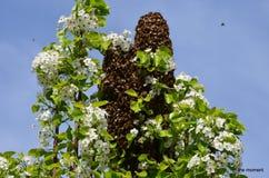Vreemde Bijen Royalty-vrije Stock Afbeeldingen