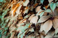 Vreemde bladeren (doorbladert) Royalty-vrije Stock Afbeelding