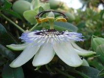 Vreemde bloem Royalty-vrije Stock Foto
