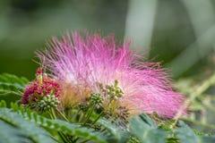 Vreemde bloem met bokehachtergrond Royalty-vrije Stock Fotografie