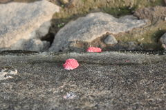 Vreemde eieren Stock Foto
