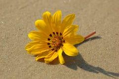 Vreemdeling op het strand Stock Foto's