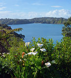 Våren blommar i Oneroa, den Waiheke ön, Auckland Royaltyfri Bild