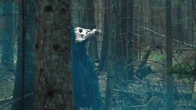 Vreselijk dier op hoge poten die door hout lopen Geheimzinnig schepsel stock videobeelden