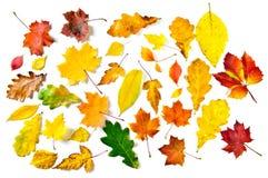 Várias folhas de outono Fotografia de Stock Royalty Free