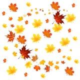Várias folhas de outono Fotos de Stock