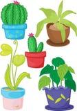 Várias plantas Fotos de Stock Royalty Free