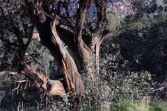 vriden arizona ensedona fotografering för bildbyråer