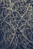 Vriden avlövad vinrankaranka arkivfoton