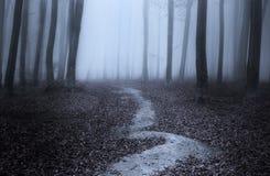 Vriden slinga i den blåa dimmiga skogen Royaltyfri Foto