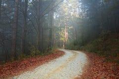 Vriden väg i skogen på dimmig dag Royaltyfri Bild