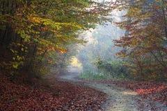 Vriden väg i skogen på dimmig dag Royaltyfria Bilder