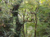 vridna trees Arkivbild