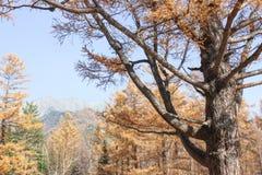 Vridning av filialer av trädet Arkivbilder