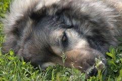 Vriendelijke hond op gras Stock Foto's